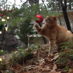 Fred attacking an ornament