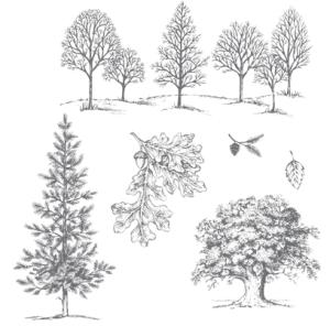 Lovely as a Tree, 128655-w, 127793-c