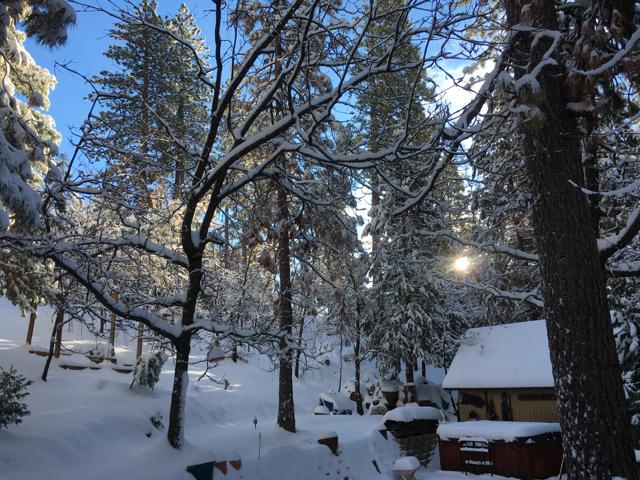 Klipple's back yard, 9 a.m., Christmas Day