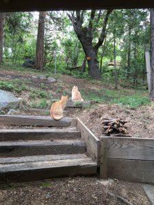 Fred & Ginger